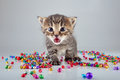 Little kitten with small metal jingle bells beads surrounding studio shot Stock Images