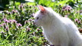 Little kitten video of a white in the grass with flowers Royalty Free Stock Photography