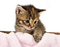 Little kitten wanting to expore the world Royalty Free Stock Photo