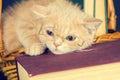 Little kitten wearing glasses