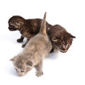 Little kittens Royalty Free Stock Photos
