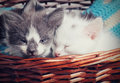 Little kittens sleeping Royalty Free Stock Photo