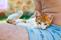 Little kitty loving sitting with his owner Royalty Free Stock Images