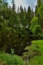 Little Lake in Green Forest Royalty Free Stock Photo