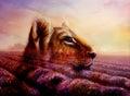 Little lion cub head on purple lavender fields Royalty Free Stock Photo