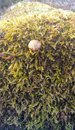 Little mushroom Royalty Free Stock Photo