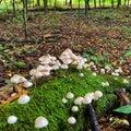 little mushrooms Royalty Free Stock Photo