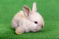 Little newborn rabbit on a green background Stock Image