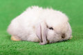 Little newborn rabbit on a green background Royalty Free Stock Photo