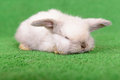 Little newborn rabbit on a green background Stock Photos