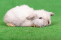 Little newborn rabbit on a green background Royalty Free Stock Image