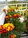 Little orange flower Royalty Free Stock Photo
