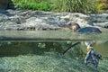 Malý tučniak vyššie a nižšie voda