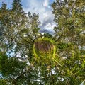 Little planet transformation of spherical panorama 360 degrees. Spherical abstract aerial view in piny forest. Curvature of space Royalty Free Stock Photo