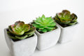 Little plants set of desktop Stock Image