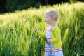 Little preschooler girl plays in wheat field Royalty Free Stock Photo
