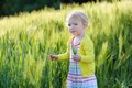 Little preschooler girl plays in wheat field adorable child blonde curly toddler playing outdoors wild green on a sunny summer day Stock Photos
