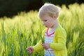 Little preschooler girl plays in wheat field adorable child blonde curly toddler playing outdoors wild green on a sunny summer day Stock Images