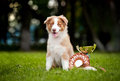 Little puppy and his award cup Stock Images