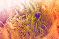 Little purple flower in meadow and sunlight Royalty Free Stock Photography