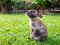 Little rabbit in the garden grass Royalty Free Stock Images