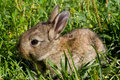 Little rabbit on green grass Stock Photos
