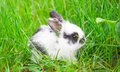 Little rabbit on green grass Royalty Free Stock Photos