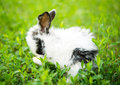 Little rabbit on green grass Royalty Free Stock Images