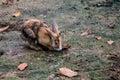 stock image of  Little rabbit