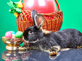Little rabbit lies beside easter eggs and a basket with a balloon Stock Photography