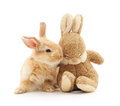 Little rabbit and toy rabbit. Royalty Free Stock Photo