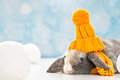 Little rabbit with woolly hat in a winter scene Royalty Free Stock Photos