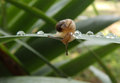 Little snail on a leaf Royalty Free Stock Photo