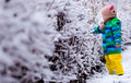 A little snow explorer child exploring bush covered with fresh seeing for the first time Stock Image