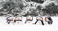 Little snowmen in a group Royalty Free Stock Images