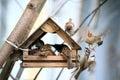 Little sparrow's in Bird Feeders