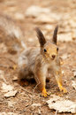 Little squirrel in park Royalty Free Stock Photography