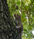 Little squirrel playing in the park