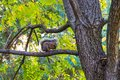 Little squirrel on walnut tree in Autumn park. Royalty Free Stock Photo