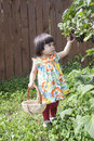 Little summer resident baby collects black currants Royalty Free Stock Images