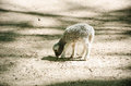 Little sweet grey sheep in park from reserve Stock Image