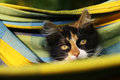 Little three colored kitten lay in hammock