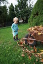 Little toddler in the barrow fall season Royalty Free Stock Image