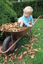 Little toddler in the barrow fall season Stock Photos