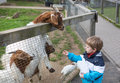 Little toddler boy feeding animals in zoo summer Royalty Free Stock Photos