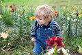 Little toddler boy on lily field in summer Royalty Free Stock Photo