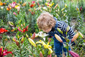 Little toddler boy on lily field in summer Stock Photos