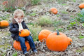 Little toddler boy on pumpkin field Stock Photos