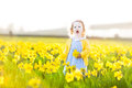 Little toddler girl field of yellow daffodil flowers beautiful curly in a blue dress playing in a on a sunny summer evening Royalty Free Stock Photos
