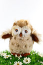 Little toy owl a wise fluffy standing on grassy bank with white daisy flowers and white background Stock Photos
